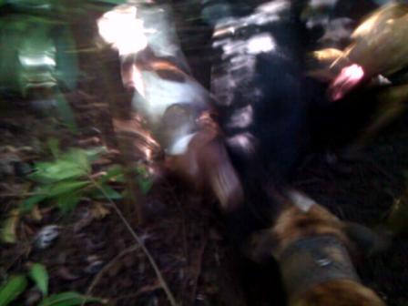 70#BOA 3inch CRANKS SHORT AFTAHNOON RUN 2-16-2013