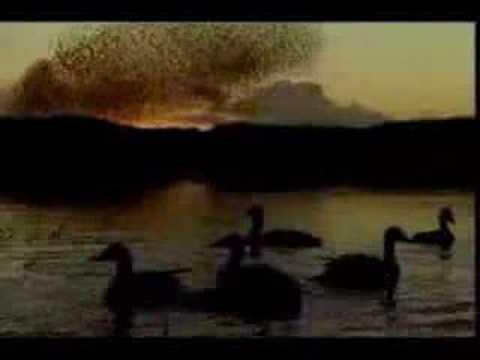 """Franco Battiato - """"Gli Uccelli"""""""