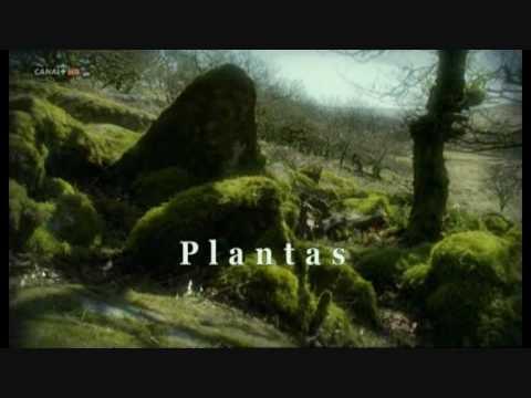 La lenta belleza de las plantas