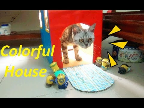 The House was Pained And My Cat Love it | DIY Making of Pet House | Meo Cover Home