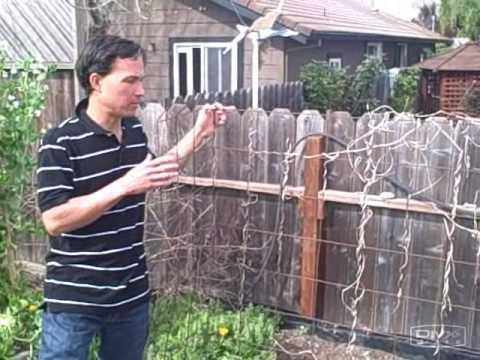 Growing Vertically in Small Spaces - Examples of Vertical Gardening Trellis Methods