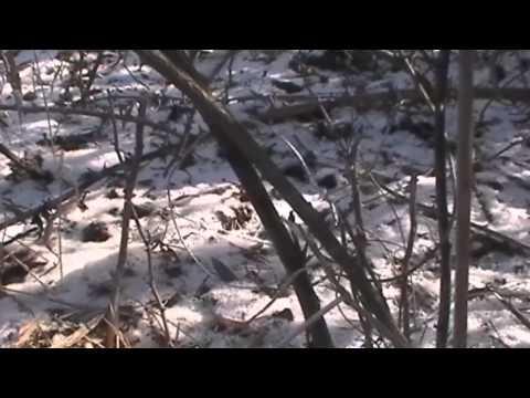 Cabin Fever Part 6 Derek on Snares