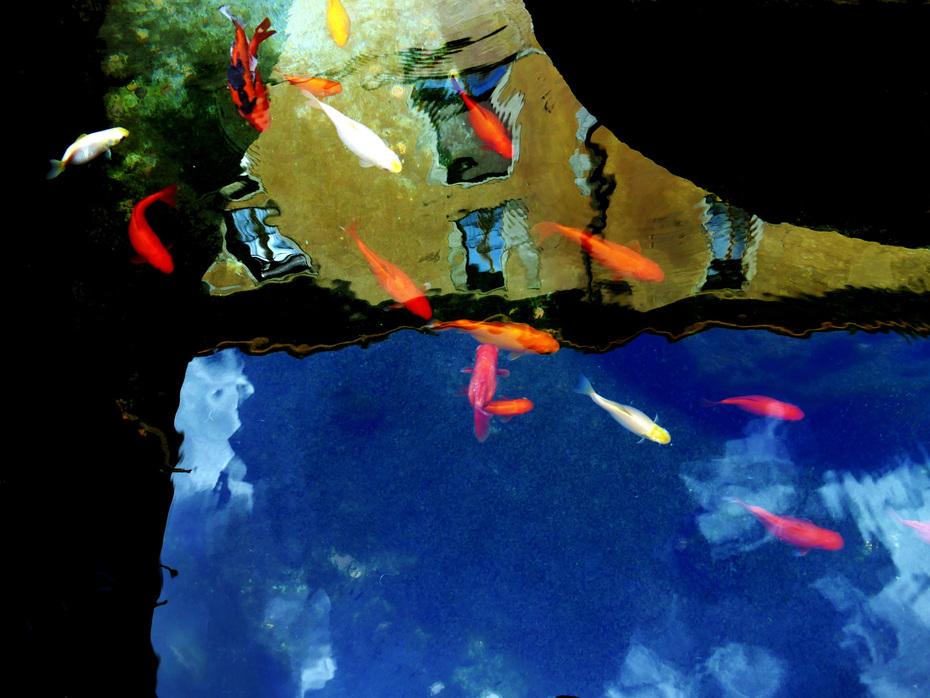 Lodi Storia con pesci rossi e riflessi  nella fontana del Broletto
