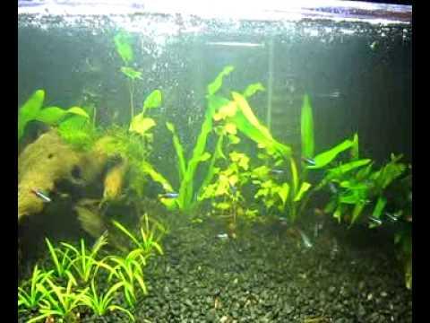 Aquarium Algae Control/Clean up crew