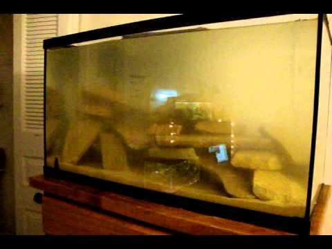 29 Gallon Mbuna Cichlid Tank Set-up