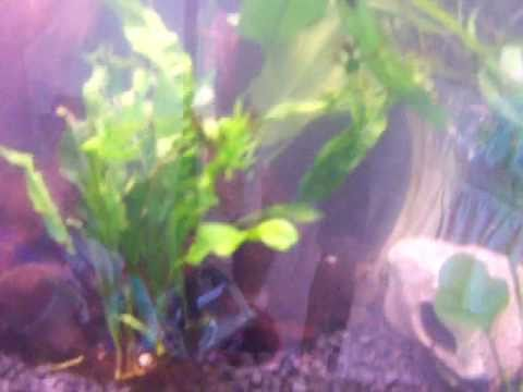 How to set up a 16 gallon aquarium with a dirt substrate