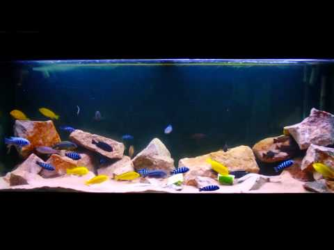 1 years worth of Aqua-scaping in under 2 minutes [HD]
