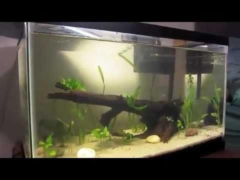 New Converted 10 gal. Aquarium!