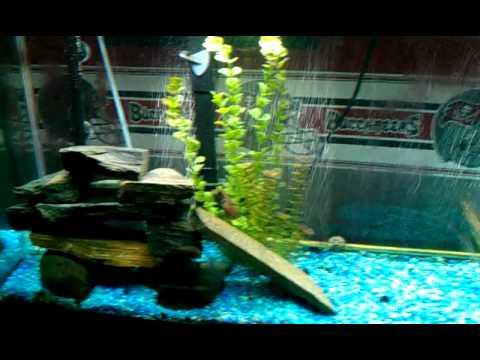 My fish tank 1