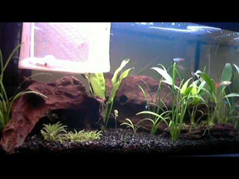 Just a video of my tank