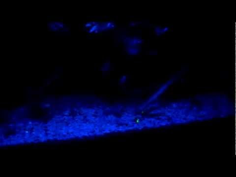 Night Light.MP4