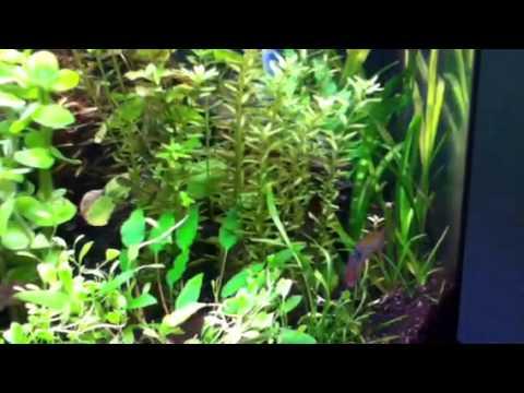 New fish new plants
