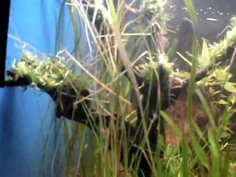 Update 2 10gal planted tank