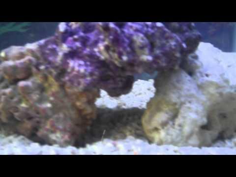 Aquarium Update # 4