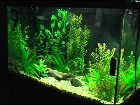 Planted Aquarium Paradise
