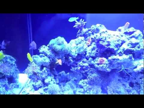 120g Saltwater Tank Update #7 (Coral and New Fish)