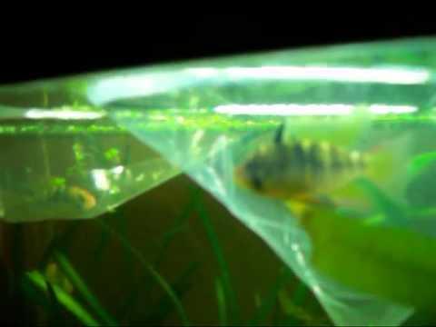 3/20/2012 20Long New Fish..