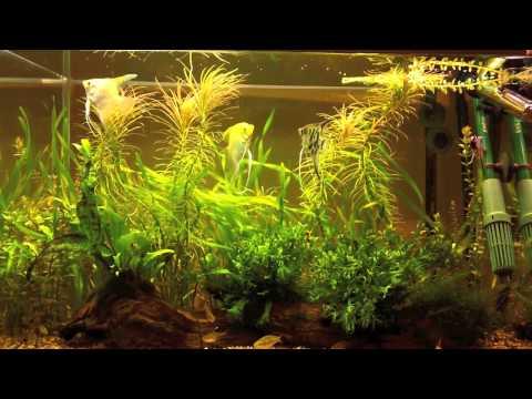 Aquarium #2 at 9 weeks
