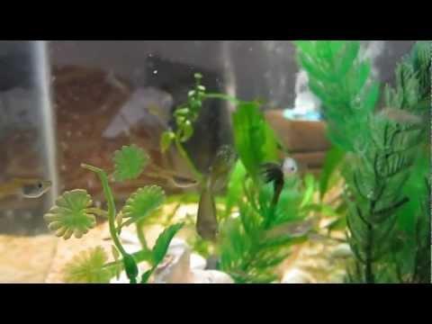 My Planted Aquarium - Canon a2200 HD