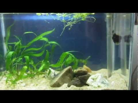 New Planted Aquascape - Making of