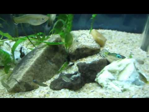 My Planted Aquarium - 1 Week after Setup