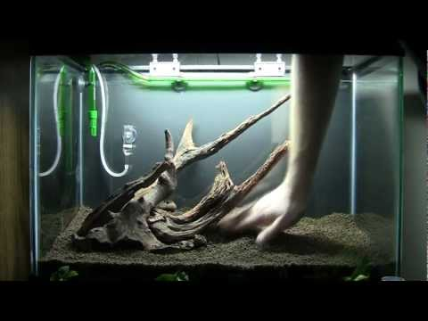 Timelapse of my Aquascape