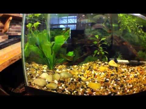 20 gallon freshwater tank