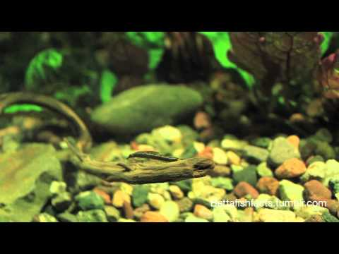My Choice Of Betta Fish Tank Mates