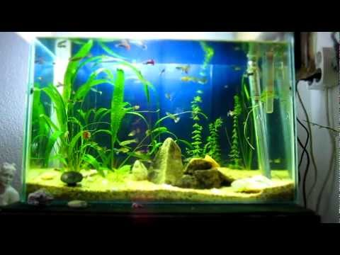 Timelapse of my Planted Aquarium (Week 5)