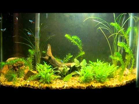 My 29 gallon freshwater aquarium