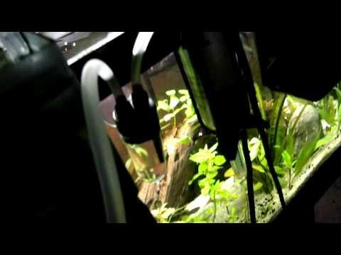 Fluval 88 Pressurized CO2 Kit - DrunkTankAquaria Episode 43