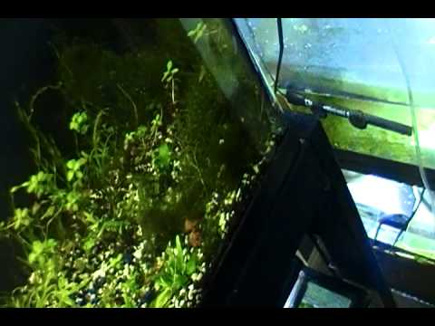 Java Ferns Trick on Grown