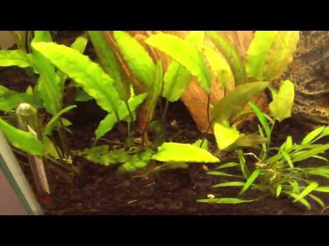 Adding some new plants