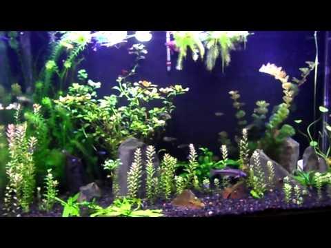 Sea Clear System II 50 Gal Update