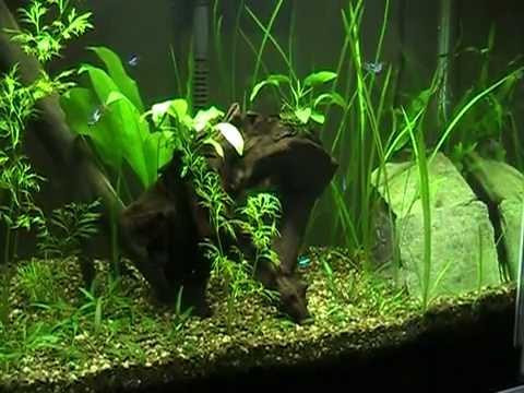 Overgrowth update