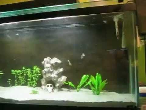 starting of planted sand tank. 1 AVI