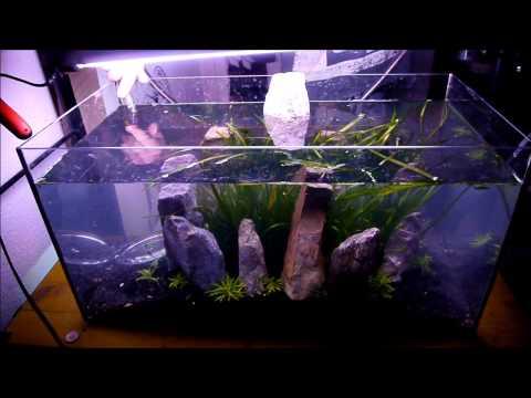 54 Liter planted tank setup time lapse