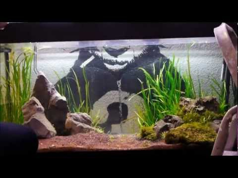 A Moss experiment, Aquarium design & Aquascaping  Time-lapse