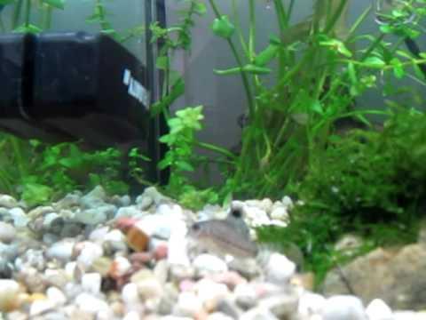 Fish tank Update / Algae bloom(maybe)