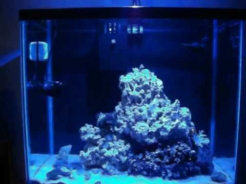 25 Gallon Reef Tank Update (5 Months Old)