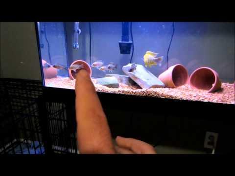 New Tank Set Up - Female Cichlids?!?!?! *Gasp*