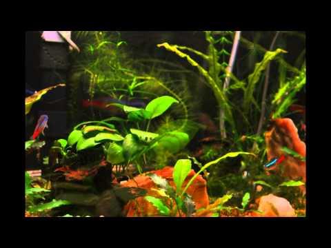 Aquarium Timelapse - Planted 10 Gallon Fish Tank