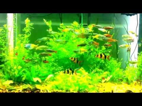Year old aquarium