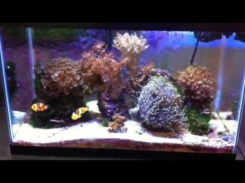 10 Gallon Saltwater Nano reef - May 6, 2013 update.