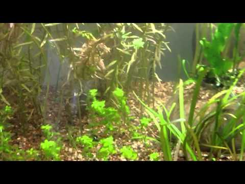 Planted tank journal: Day 6