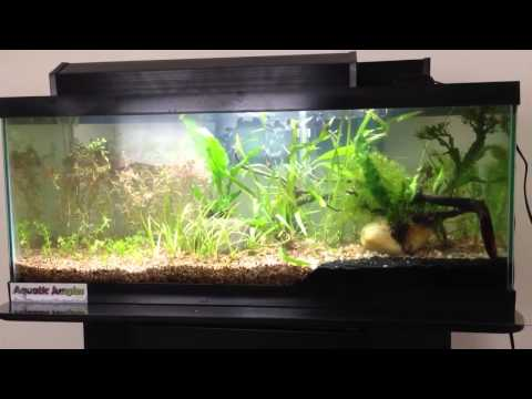 Planted tank journal: Day 4