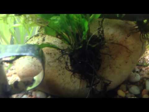Wednesday Plant Special: Java Fern