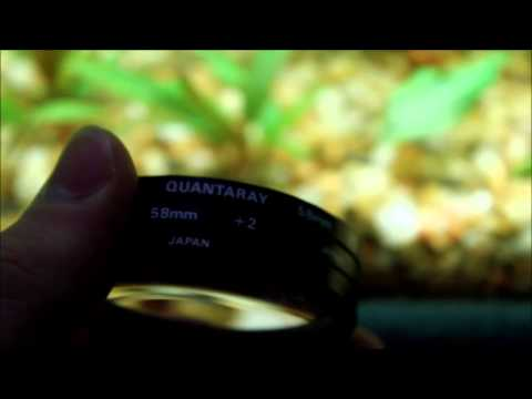New Amano shrimp and a video making tip