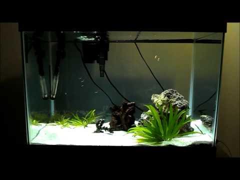 My Angel Fish