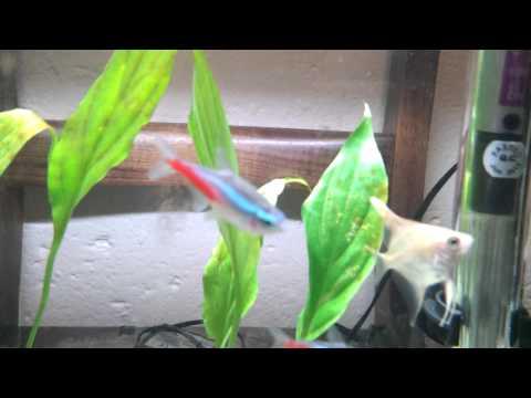 FishTankTV Please Help With My Aquarium Plants!